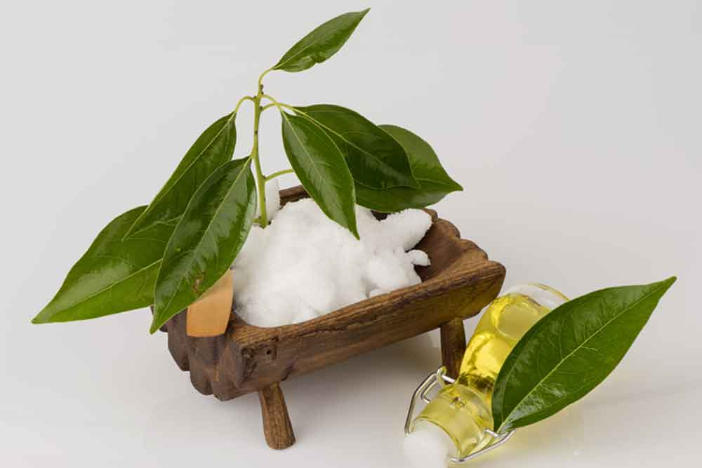 dangers camphor oil